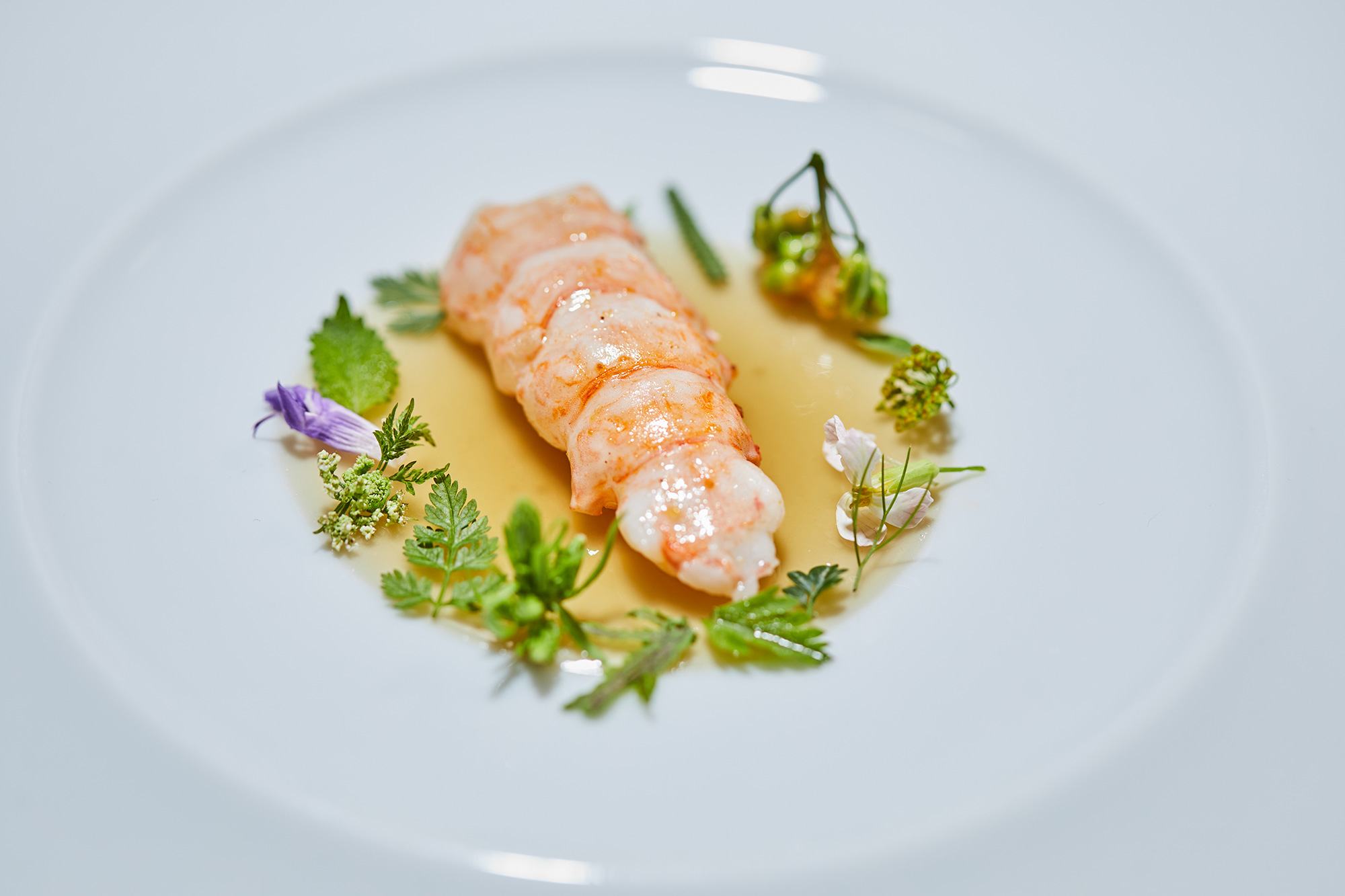 Reduction of langoustines with today's harvest of sprouts, herbs and flowers